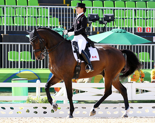 Belinda Trussell was competing her Anton as one of two individuals from Canada in Olympic dressage. Belinda and her German Sport Horse made it through to the Grand Prix Special and a chance to make it to the Freestyle to decide individual medals. © 2016 Ken Braddick/dressage-news.com