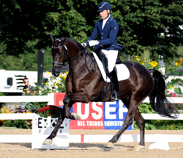 Endel Ots and Lucky Strike in the USA Six-Year-Old Championships. © 2016 Ken Braddick/dressage-news.com