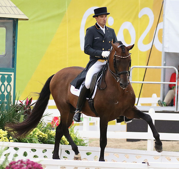 Grandioso ridden by Jose Daniel Martin Dockx at the Rio Olympics, the stallion's last competition Grand Prix and will be retired to the American owner's farm. © 2016 Ken Braddick/dressage-news.com