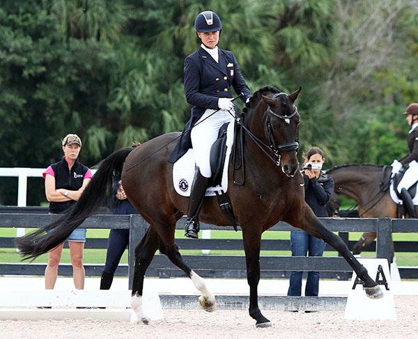 Salvino being ridden by Adrienne Lyle a month before the 2017 Global Dressage Festival starts. © 2016 Ken Braddick/dressage-news.com