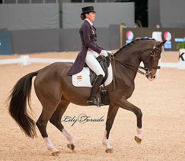 Sir Radjah being ridden by Beatriz Ferrer-Salat. © 2016 Lily Forado for dressage-news.com